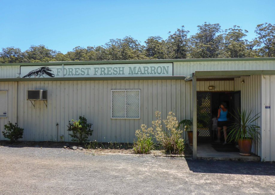 20-1 forest fresh marron outside
