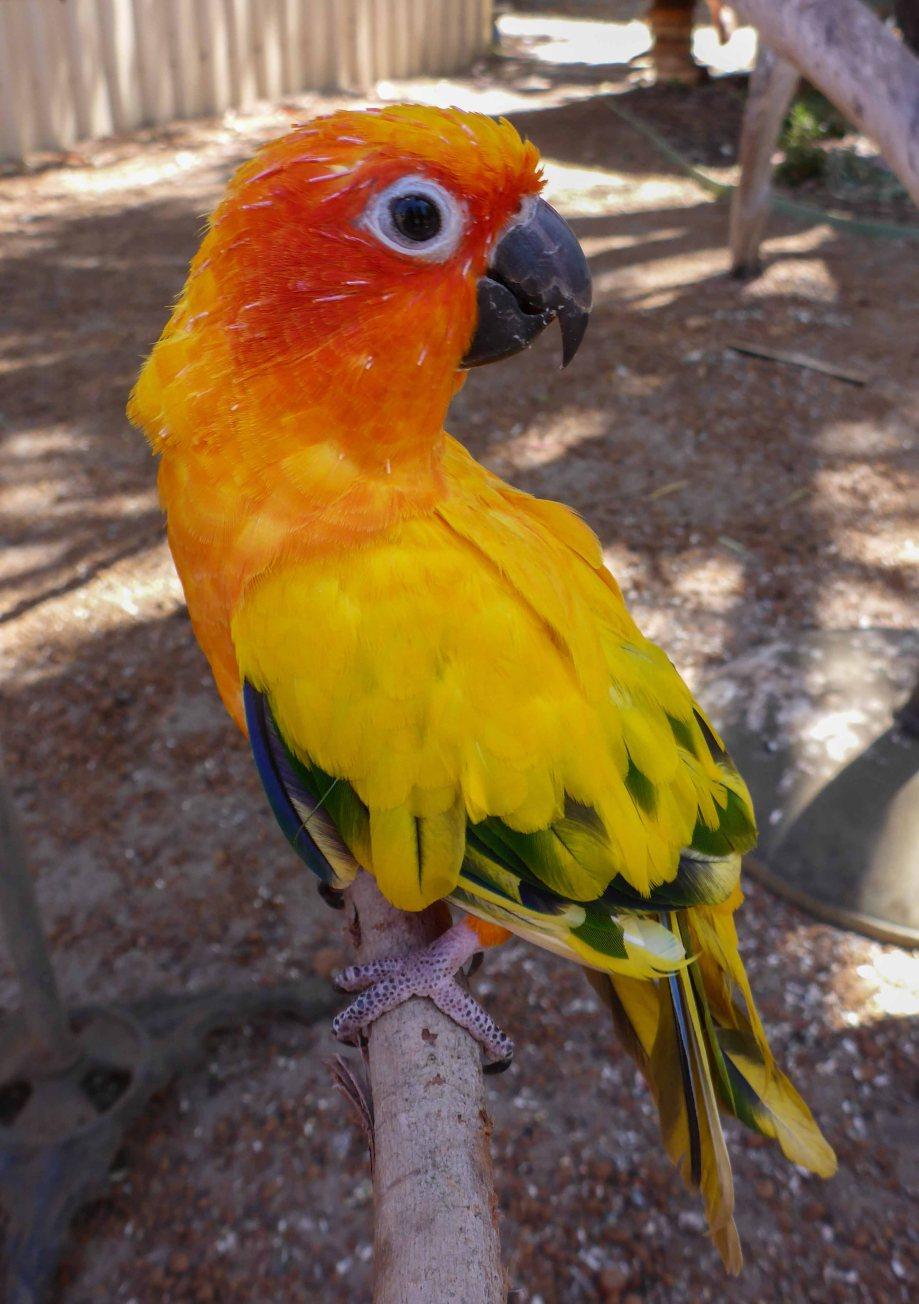 25-1 parrot