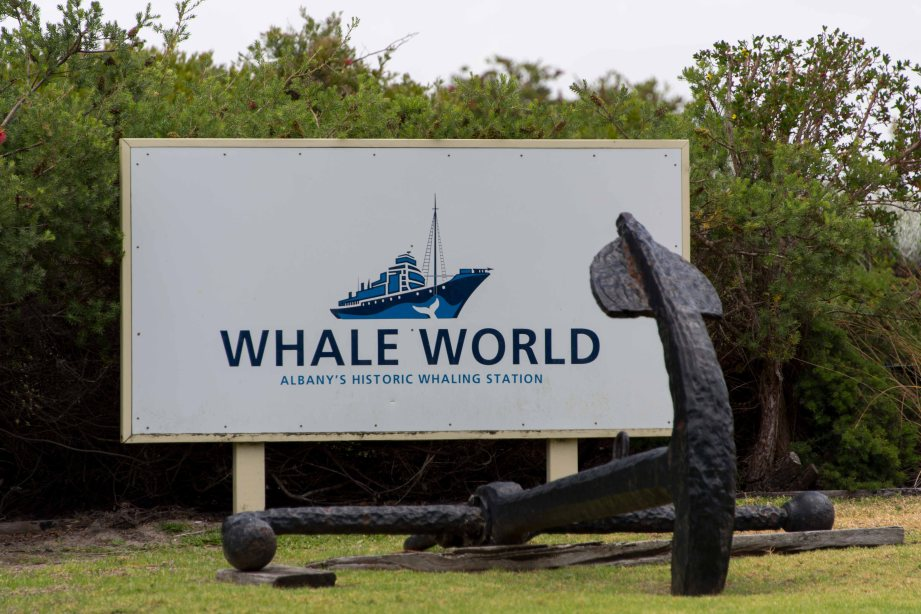 31-1 whale world sign