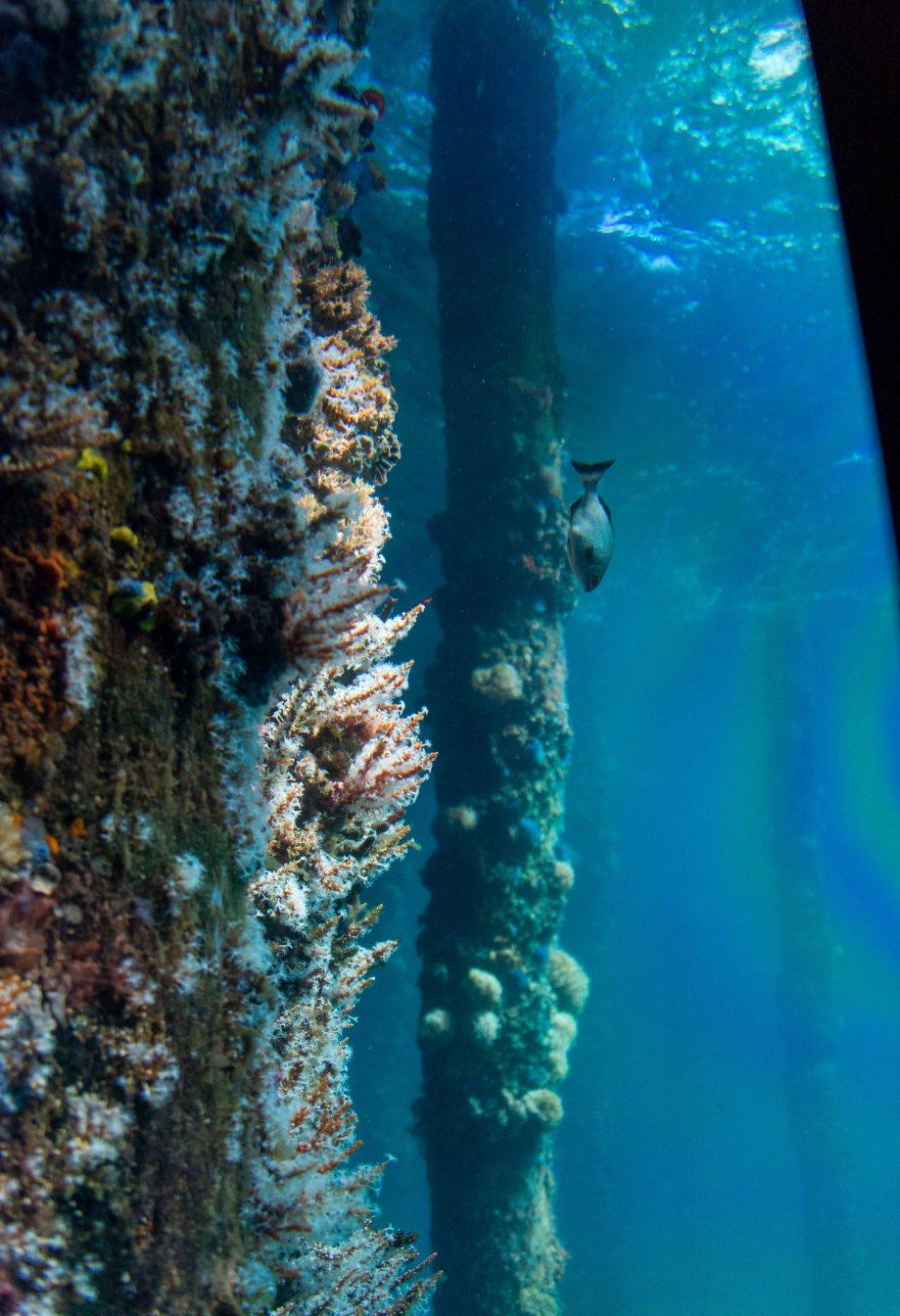 7-1 under busselton jetty